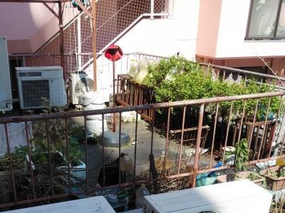 屋上 防水修繕工事 施工前 神戸市 トラブラン