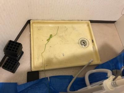 洗濯機撤去 洗濯パン 取り外し 作業中 神戸市 トラブラン
