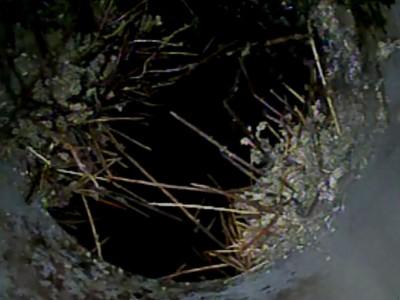 コンクリート桝 根っこ 詰まり原因 配管内 カメラ挿入 神戸市 トラブラン